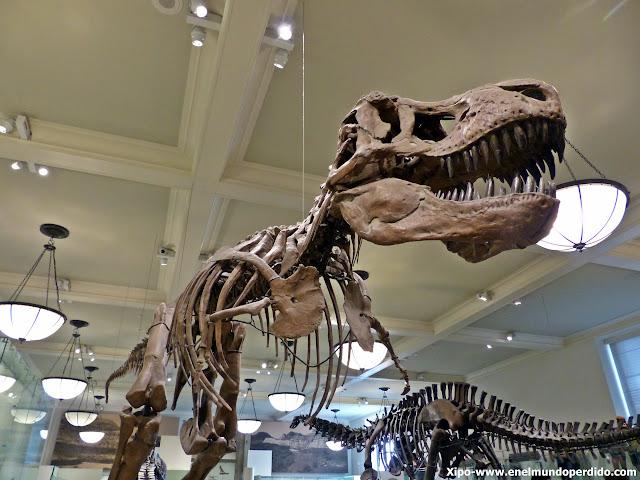 tiranousaurio-rex-museo-historia-natural-nueva-york.JPG