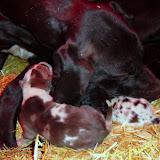 Gigi & her babies @ 1 week