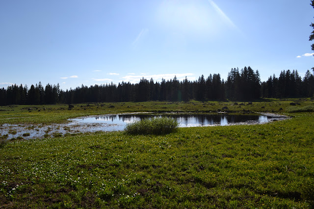 shallow pond in the meadow