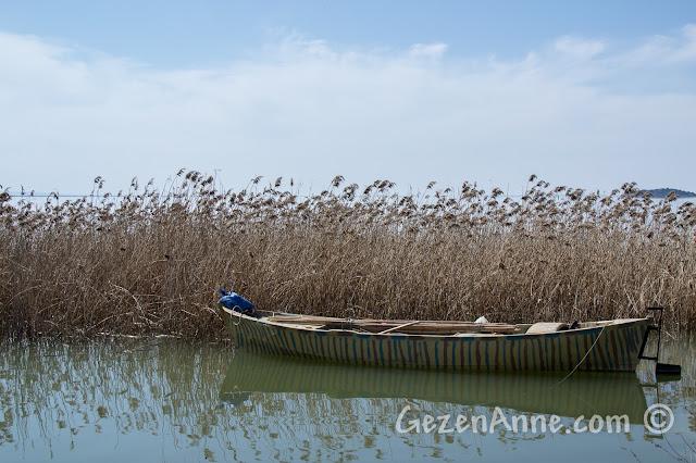 Uluabat Gölü'ndeki sazlıklar ve bir tekne