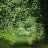 L'allée forestière, le 5 juillet 2012. Les Hautes-Lisières (Rouvres, 28). Photo : J.-M. Gayman