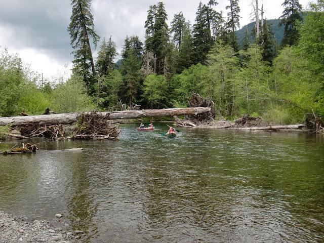May 2014 Wynoochee Lake Camp/Canoe - CIMG5200.JPG