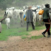 Cattle Colonies In Nigerian States Will Begin Next Week – Presidency