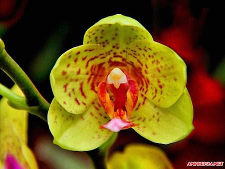 BST hình nền hoa lan hồ điệp đẹp nhất thanh khiết sang trọng vô cùng quý phái