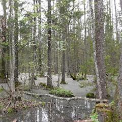 5.Mokradła w Puszczy Białowieskiej  Piękno i bioróżnorodność Puszczy Białowieskiej zrobiła na nas ogromne wrażenie. Niewiele jest miejsc w Polsce, które zachwycają swoją naturalną dzikością. Na niektórych szlakach spotykaliśmy dodatkowe atrakcje, takie jak zwalone drzewa w poprzek drogi czy wąskie kładki nad strumykami.