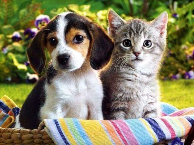 Dog+Cat