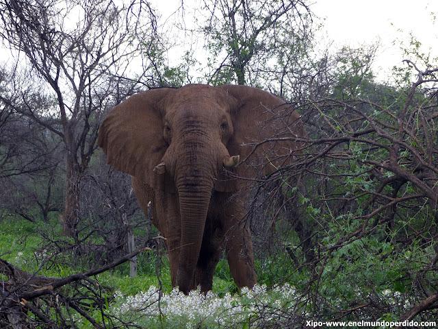 elefante-erindi-namibia.JPG