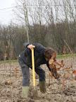 20120128-boomplantactie-preshoekbos / P1280027.JPG