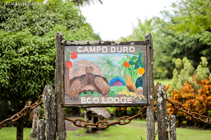 Galapagos Safari Camp - Campo Duro with Galapagos Tortoises.