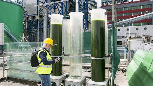 La central de Endesa en Carboneras ha puesto en marcha diversos proyectos para fomentar la sostenibilidad y el cuidado al medioambiente.
