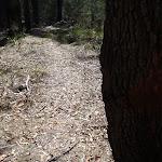 Faint track to Field Study Huts (103603)