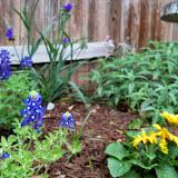 Gardening 2014 - 116_1262.JPG