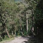 Camino en el valle del Cocora