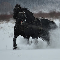 Dumitru Vlad's avatar