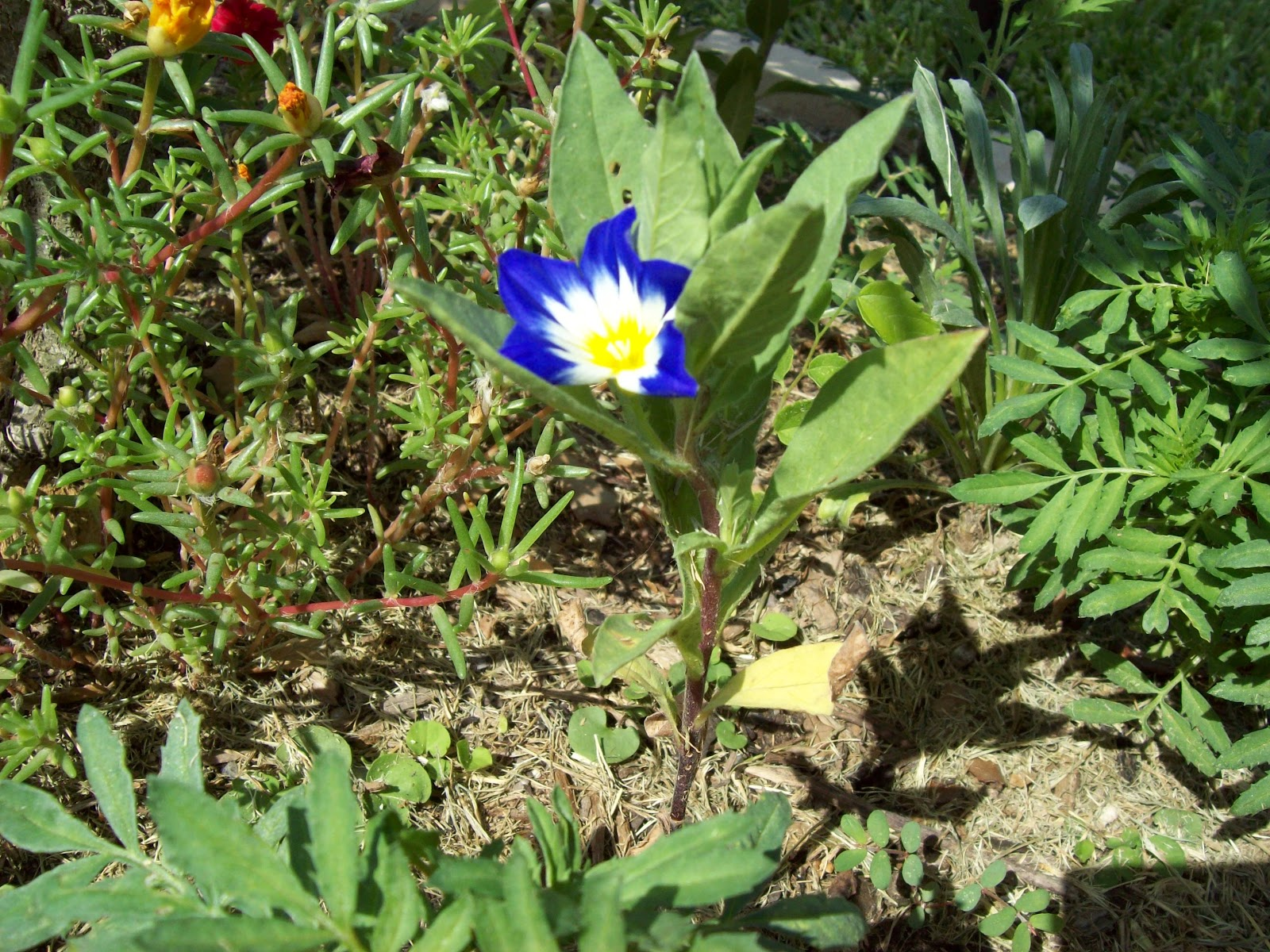 Gardening 2009 - 101_4891.JPG