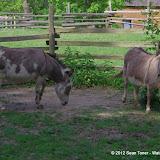 05-11-12 Wildlife Prairie State Park IL - IMGP1612.JPG
