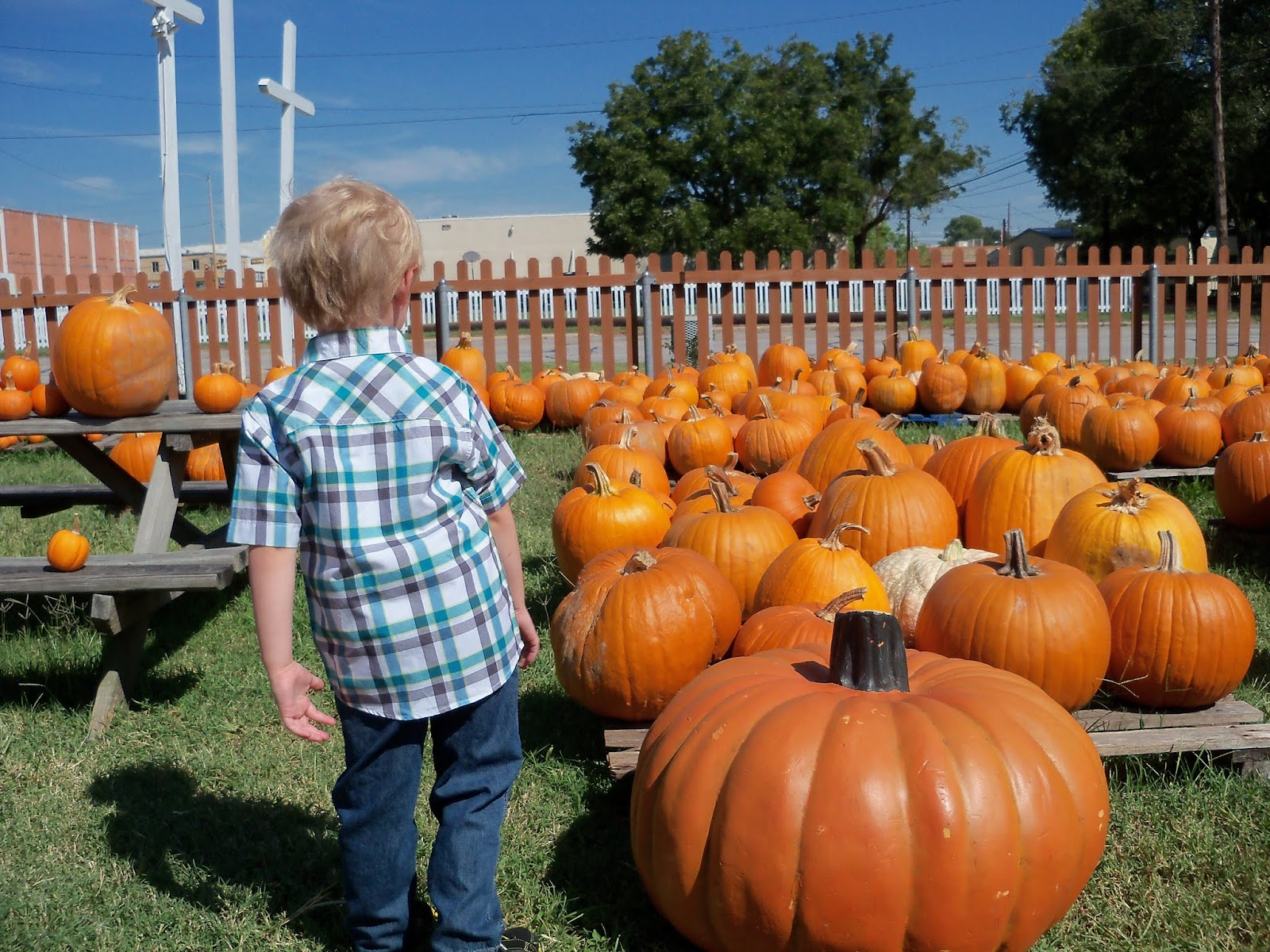Pumpkin Patch 2015 - 100_0450.JPG