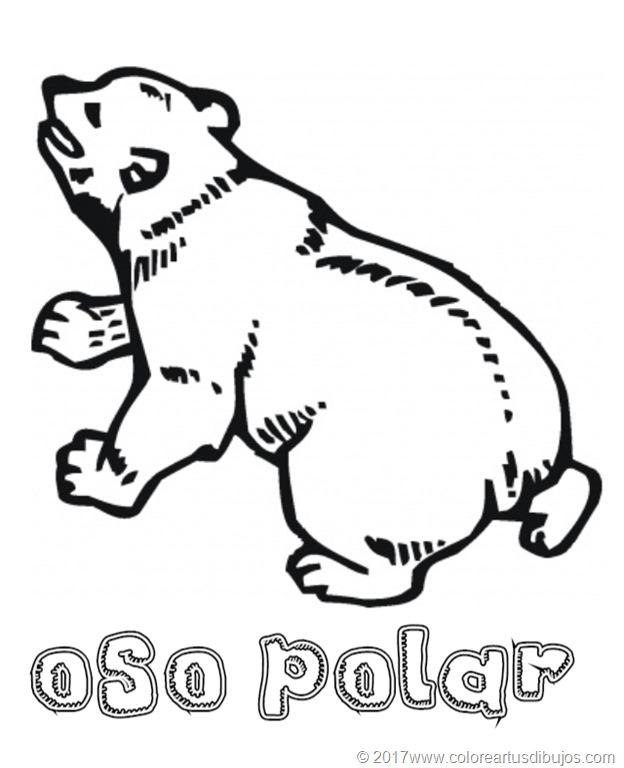 [osos-polar--24]