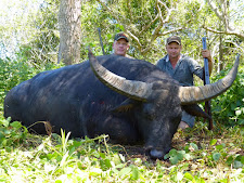 Mr Thad Stevens from USA, Barnes Bullet Co. enjoyed getting in close on this buffalo. This wide horned bull is also massive in body size.... one of the bigger bulls I have seen. He took 6 shots from a 458 win mag, all loaded with 500 grain Barnes TSX bullets. That is a combined 2500 grains of projectile before he stopped running!