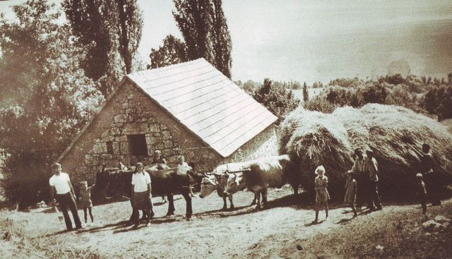 volovi na buškom blatu