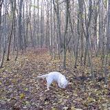Bukowina jesienią (09.11.2008r.)