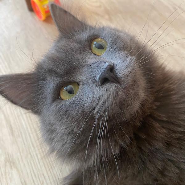 The MatriX (MatriX)
