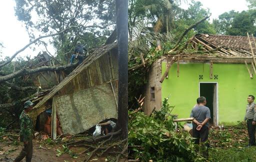 2 rumah beda desa di Jampang Tengah tertimpa pohon tumbang / Foto : Istimewa