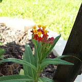 Gardening 2009 - 101_5226.JPG
