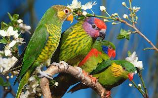 Vier papegaaien op een tak