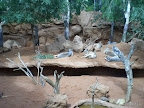 Chillende Kängurus