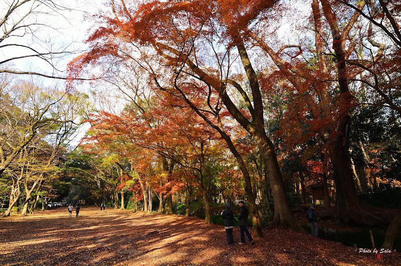 京都下鴨神社楓葉