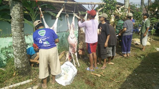 Domba kurban sedang dikuliti