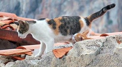 Tapfere Katzenmutter säugt ihr Junges auf den Dächern von Cefalù