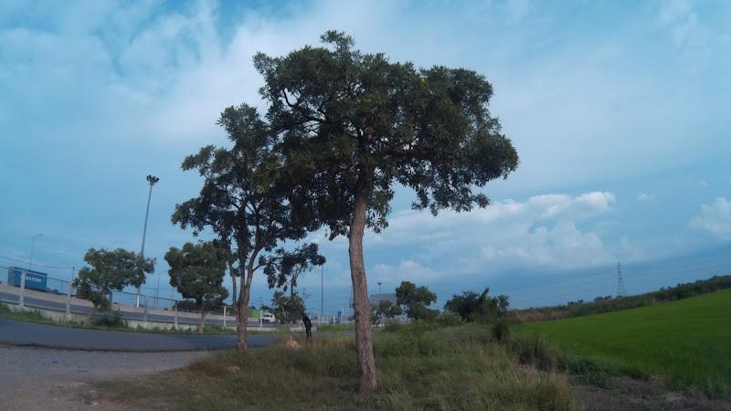 ภาพต้นไม้