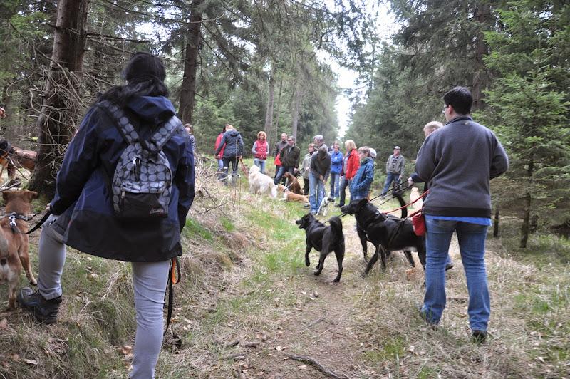 2014-04-13 - Waldführung am kleinen Waldstein (von Uwe Look) - DSC_0406.JPG