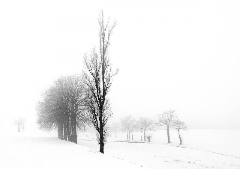 L'abbraccio della nebbia di Livius