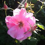Gardening 2012 - IMG_3118.JPG