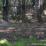 04-07-12 Homosassa Springs State Park - IMGP4543.JPG
