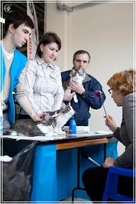 cats-show-24-03-2012-fife-spb-www.coonplanet.ru-076.jpg
