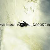 _DSC0579.thumb.jpg