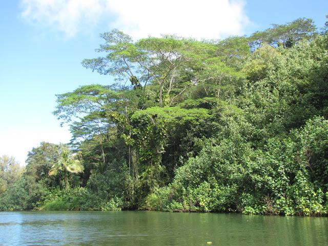 2012 - IMG_9170_Kalihiwai_River_Kayaking.JPG