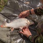 20160706_Fishing_Grushvytsia_027.jpg