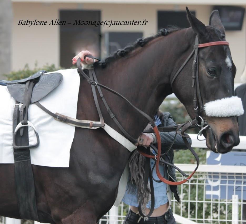 Photos Auteuil 14-03-2015 IMG_7370