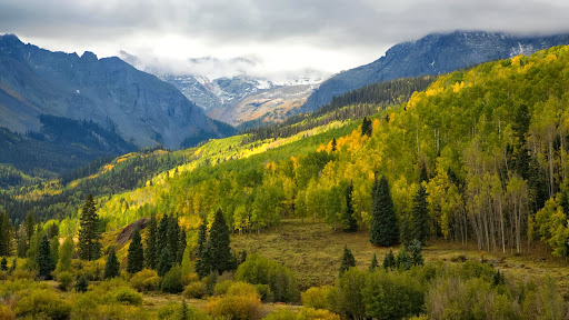 Along the Dallas Divide in Autumn, Ridgeway, Colorado.jpg