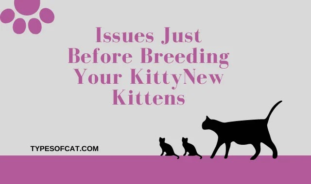 Issues Just Before Breeding Your Kitty