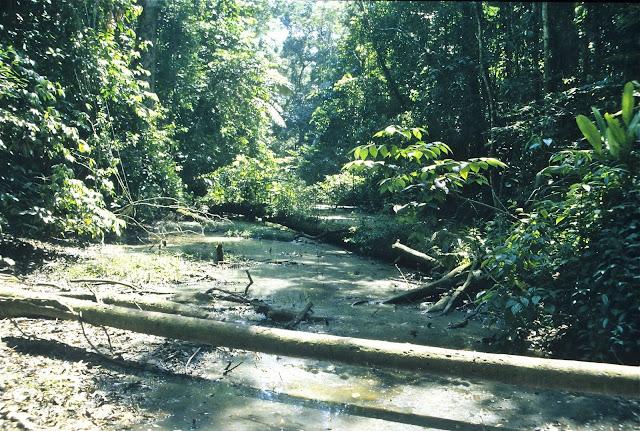 Forêt marécageuse près du Tambopata Research Center. Août 2004. Photo : J.-M. Gayman