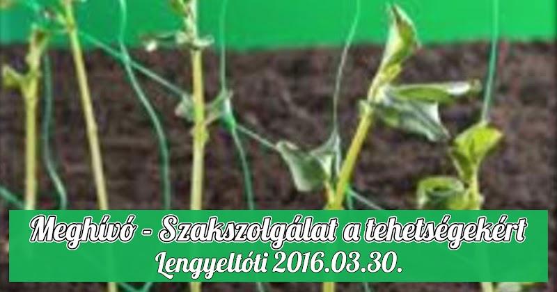 Meghívó - Szakszolgálat a tehetségekért - szakmai nap - 2016