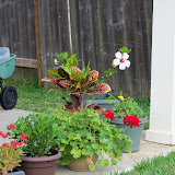 Gardening 2011 - 100_7641.JPG