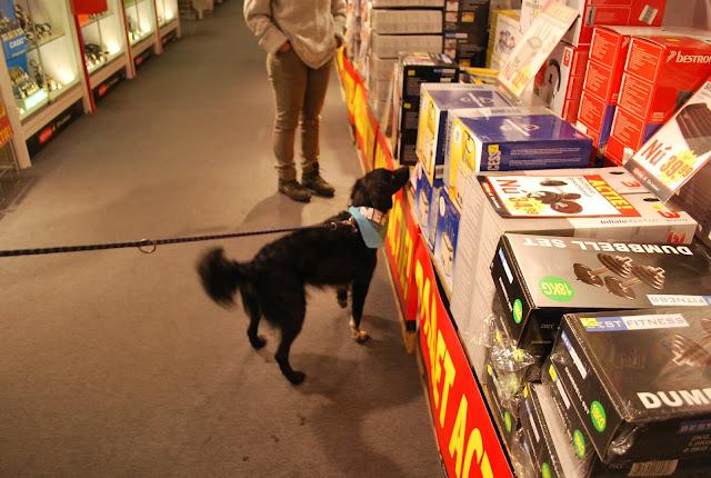 KNON-honden in Emmen - DSC_0793.JPG