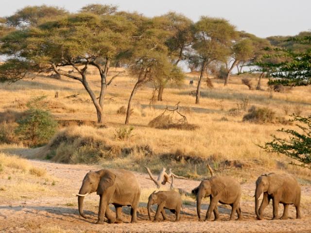 Tanzania olifanten
